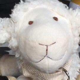 Kirk das Schaf – Logbucheintrag Nr. 1